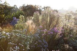 Gräser und Winterastern im tiefstehenden, dunstigen Sonnenlicht in ländlicher Umgebeung