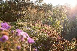 Beete in Gärtnerei mit Winterastern, Gräsern und Gehölzen im dunstigen Sonnenlicht