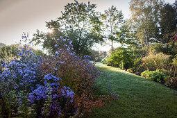 Lilafarbene Astern vor Lichtung mit tiefstehender Herbstsonne hinter Bäumen und Sträuchern