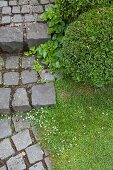 Paved path and box ball in garden