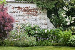 Flowering bushes and perennials in front of brick wall with peeling white paint
