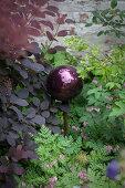 Dark purple ball amongst foliage plants and corydalis
