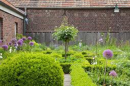 Angelegter Garten mit Formhecken und blühendem Zierlauch vor Bauernhaus aus Ziegel