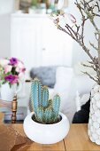 Cactus in white ceramic bowl next to vase of magnolia branches