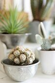 Kaktus in Silberschale