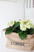 White hydrangea in printed linen sack