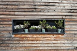 Horizontal window with window boxes in wooden façade