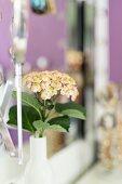 Hortensie in weisser Vase vor Spiegel auf Schminktisch