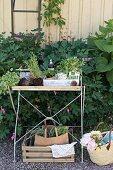 Pflanztisch mit Gartenutensilien, seitlich Korb auf Kiesboden in Freiem
