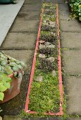 Bed of stones and mosses with pink edge in paved path
