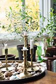 Brass candlesticks and seashells on tray in front of house plants