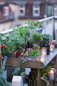 Potting bench on roof terrace decorated with plants and tealights at twilight