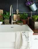 Kitchen sink decorated with various potted plants
