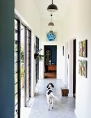 Dog in narrow corridor with pendant lamps and terrace doors