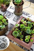 Various containers decoratively planted with succulents on balcony table