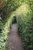 Narrow path in densely planted garden