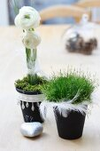 Moss and grass in plant pots decorated with ribbons and feathers as festive table decorations