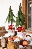 Flower pots holding Christmas trees made from thuja sprigs, amaryllis and nuts behind apples on stack of firewood