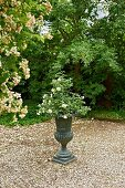 Rose planted in urn on gravel area in garden
