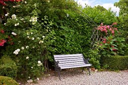 Romantic garden bench below roses climbing over trellis arch in front of green hedge