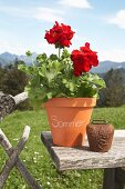 Red geranium in labelled terracotta pot on wooden board outside with Alpine landscape in background