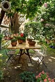 Potted plants on wooden table and simple folding chairs under shady tree in courtyard