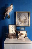 Insects in display cases, stuffed birds and framed, antique headdress on blue-painted wall
