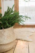 Basket of fir branches on wooden floor