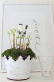 White-flowering plant and moss in ornate metal pot