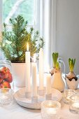 Four lit white candles and tealights in front of small potted Christmas tree and hyacinths