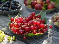 Freshly picked redcurrants in flan tin