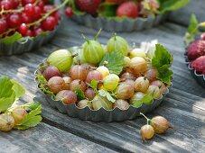 Frisch gepflückte Stachelbeeren in Kuchenform