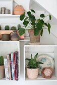 Potted plants on white modular shelves on wall below staircase