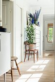 Pale wooden floor and potted plant on bentwood chair in hallway
