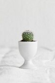 Small cactus planted in eggcup on white linen cloth