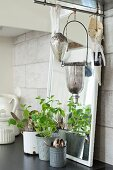 Vintage-style pots of herbs and cutlery in front of mirror