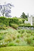 Bed of ornamental grasses surrounded by hedges in garden