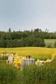 Festively set table in field of flowering rapeseed with view of green landscape