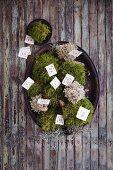 A moss nest as an advent calendar