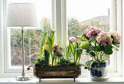 Brass bowl of spring flowers and potted hydrangea on windowsill