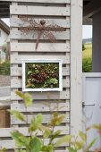 Vertical garden of succulents in picture frame