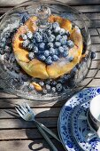 Blueberry cake under glass cover on garden table