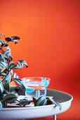 Houseplant and glass on tray table against orange wall