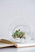 Gravel and plant in decorative, spherical glass terrarium