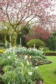 Flowering magnolia and flowerbeds in spring garden