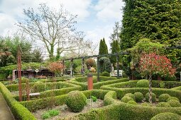 Clipped hedges and box balls in knot garden