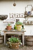 Planters on old table against white brick wall