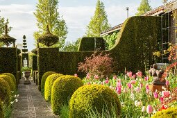 Geometrically clipped hedges separating different areas of garden