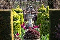 Fuchsia-pink tulips in gardens