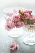 Glass bowl of Japanese cherry blossom